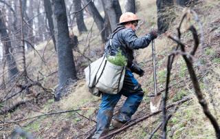 California Fire Restoration One Tree Planted 2000x