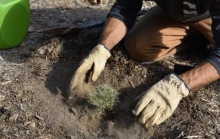 California Plant Trees One Tree Planted 3207f689 f394 40af 9b10 49eca76c3566 2000x